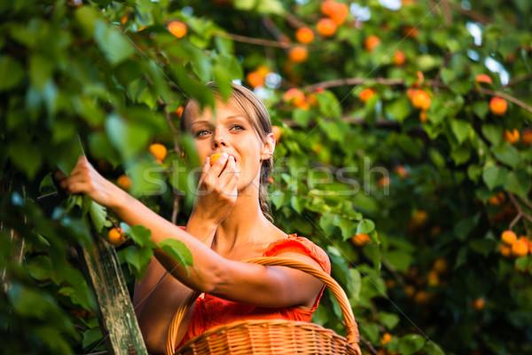 かなり 若い女性 ピッキング 夏 ストックフォト © lightpoet