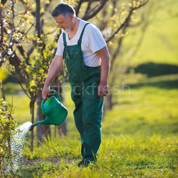 watering orchard/garden - portrait of a senior man gardening Stock photo © lightpoet