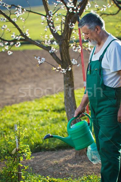 watering orchard/garden Stock photo © lightpoet