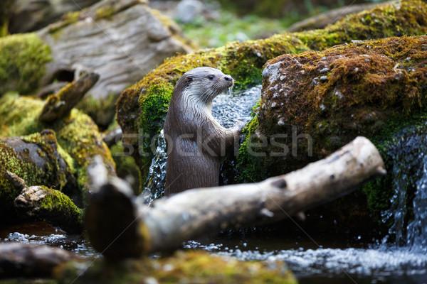 Ağaç yüz nehir hayat kafa hayvan Stok fotoğraf © lightpoet