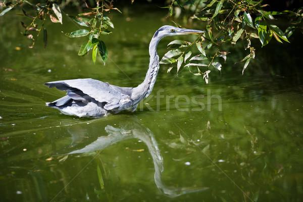 Grijs reiger hemel zomer vogel groene Stockfoto © lightpoet