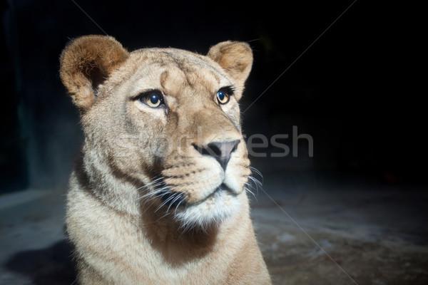 Közelkép portré fenséges természet arc háttér Stock fotó © lightpoet