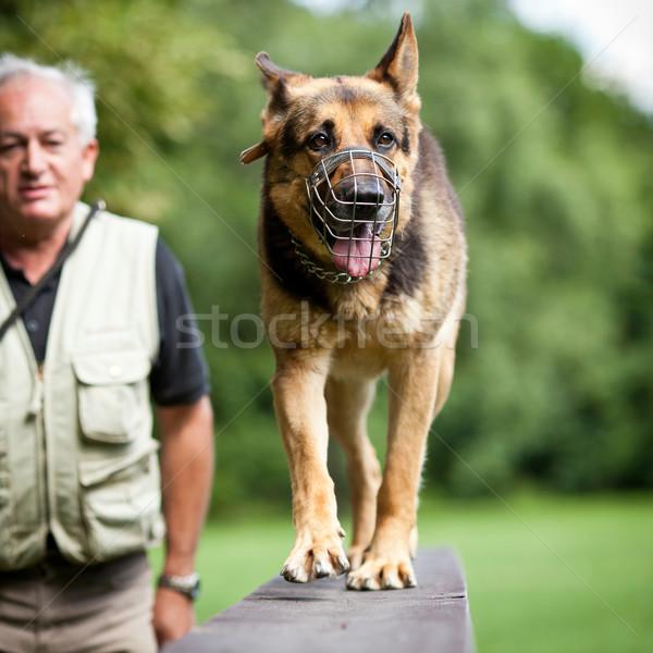 Maestro obediente perro centro pastor Foto stock © lightpoet