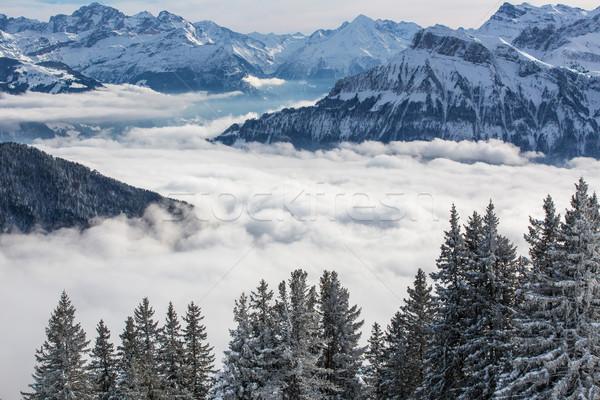 Splendid winter alpine scenery with high mountains and trees Stock photo © lightpoet
