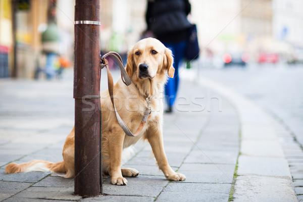 Photo stock: Cute · chien · attente · maître · rue · de · la · ville · triste