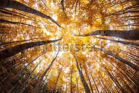 Najaar bos vervormd afbeelding shot fisheye Stockfoto © lightpoet