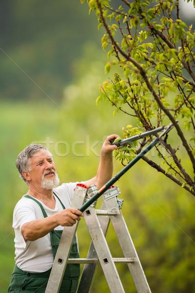 Senior man gardening in his garden Stock photo © lightpoet