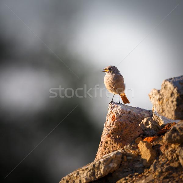Foto stock: Preto · primavera · caneta · verão · laranja · pássaro
