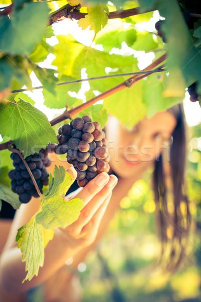 Uvas vinha feminino cor folha trabalhador Foto stock © lightpoet
