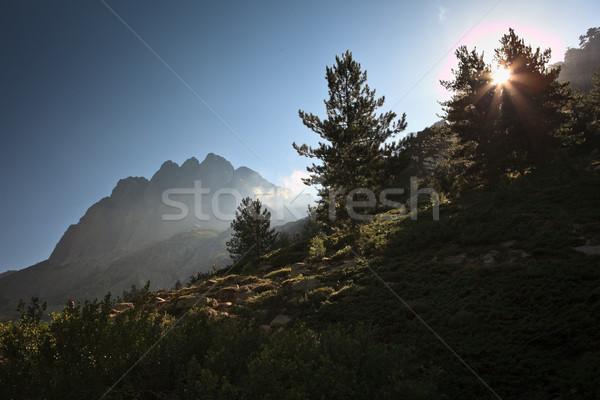 Inland Corsica, splendid Restonica Valley - with natural pools Stock photo © lightpoet