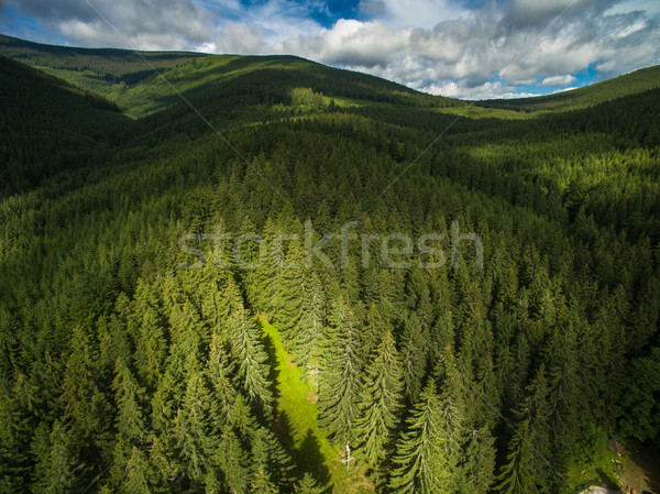 Aerial view of mountains covered with coniferous forests Stock photo © lightpoet