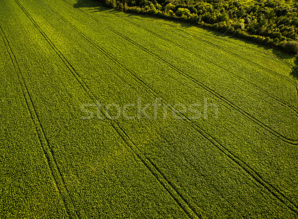 Farm fölött légi kép buja zöld Stock fotó © lightpoet