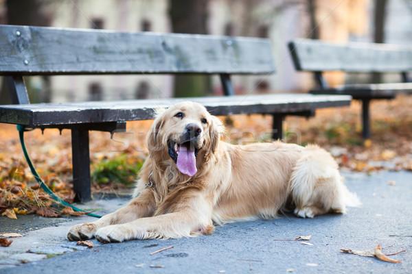 Cute chien attente maître rue de la ville rue Photo stock © lightpoet