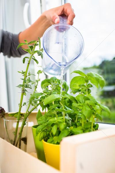 Watering the kitchen herbs  Stock photo © lightpoet