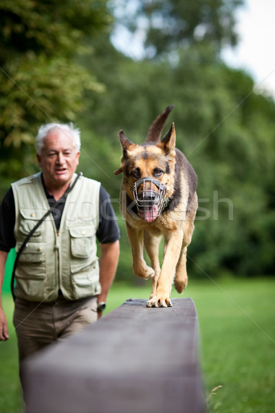 Itaatkâr köpek köpek eğitim çoban Stok fotoğraf © lightpoet