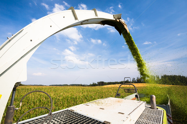 Modern combine harvester unloading green corn into the trucks Stock photo © lightpoet