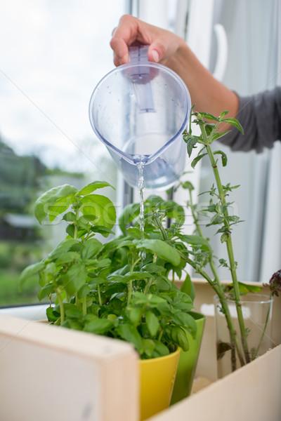 Foto stock: Cozinha · ervas · mulher · jovem · água · doce