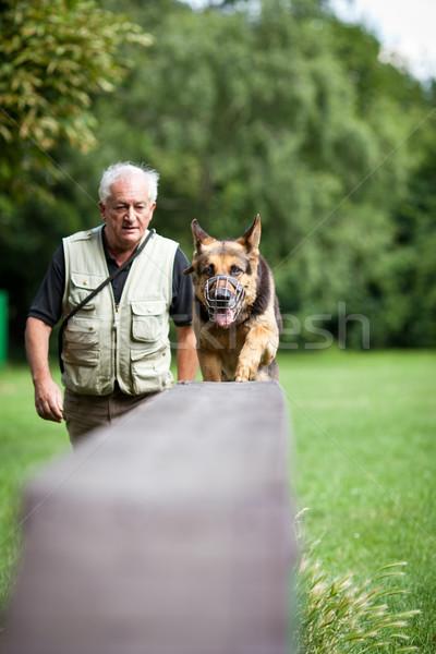 Сток-фото: послушный · собака · Кинологический · центр · пастух