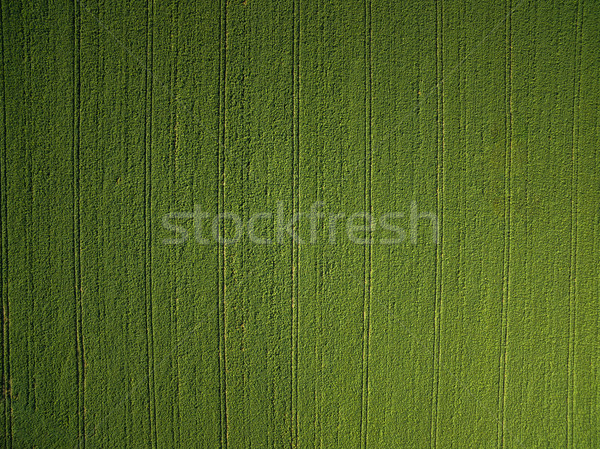 Farmland from above - aerial image of a lush green filed Stock photo © lightpoet