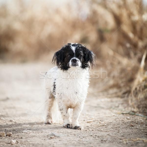 Cute mały psa uśmiech twarz zielone Zdjęcia stock © lightpoet