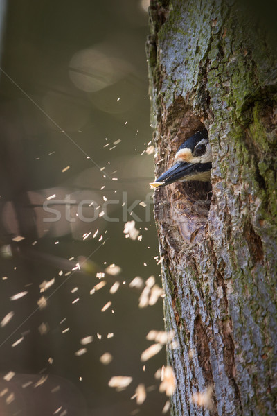 Groot familie nieuwe holte voorjaar Stockfoto © lightpoet