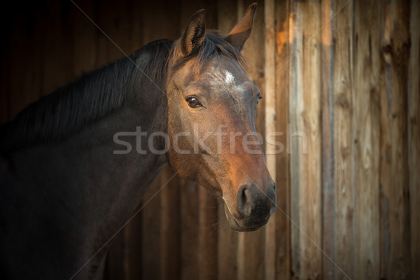 Horse in a stable Stock photo © lightpoet