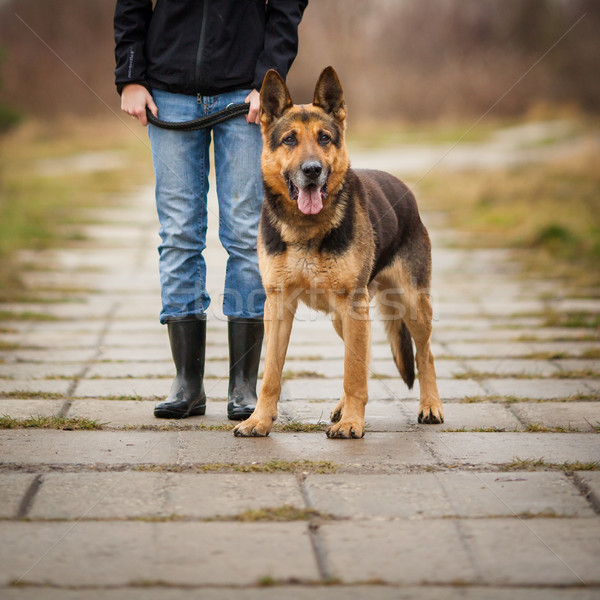 Master and her obedient (German shepherd) dog Stock photo © lightpoet