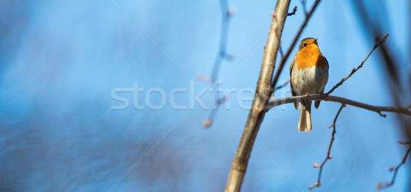 Einfach Baum Wald Sonne Natur Stock foto © lightpoet