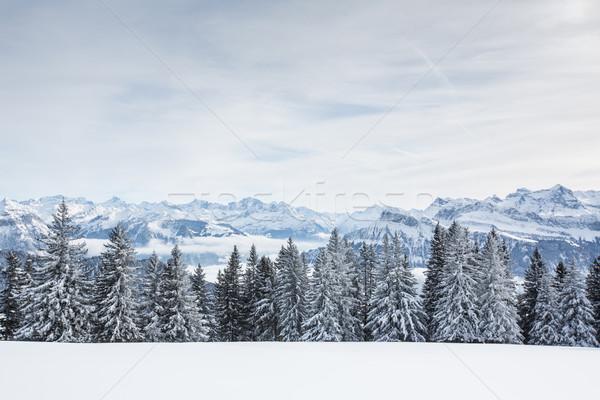 Kış alpine manzara yüksek dağlar ağaçlar Stok fotoğraf © lightpoet