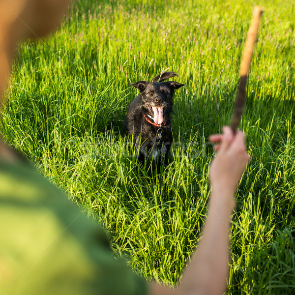 Walking the dog - throwing the stick to fetch Stock photo © lightpoet