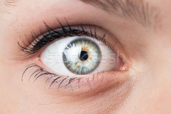 Mooie vrouwelijke Blauw oog gezicht Stockfoto © lightpoet