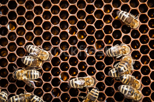 Macro coup abeilles en nid d'abeille jardin cadre Photo stock © lightpoet