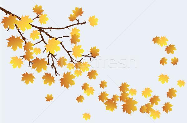 Cair ramo vetor folhas floresta natureza Foto stock © lilac