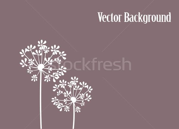 Fennel Flower Stock photo © lilac