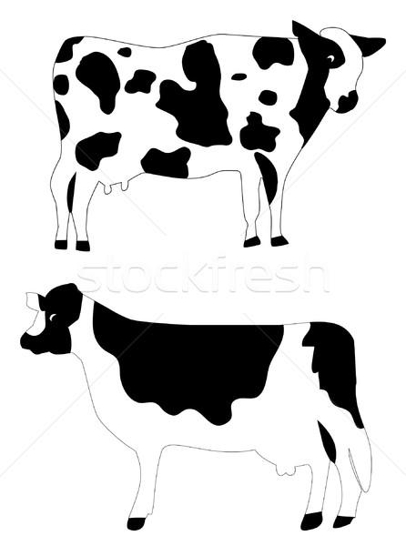 Vaca vetor dois vacas isolado branco Foto stock © lilac