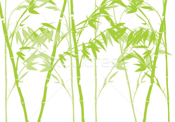 Bamboo Stock photo © lilac