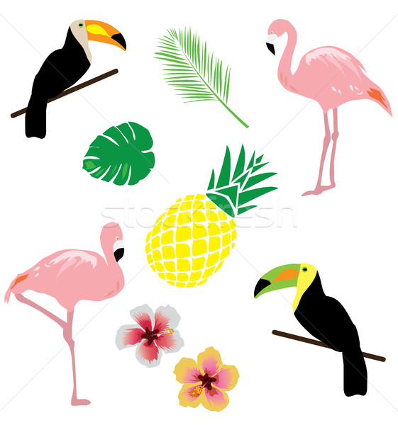Vektör tropikal tropikal çiçek flamingo orman dizayn Stok fotoğraf © lilac
