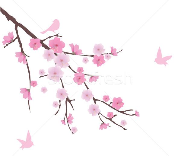 Kiraz çiçeği vektör çiçek kiraz yaprak Stok fotoğraf © lilac