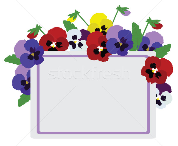 Vector Pansies Flowers Stock photo © lilac
