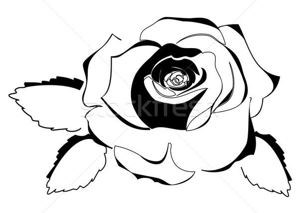 Rosa silhueta parede quadro preto Foto stock © lilac