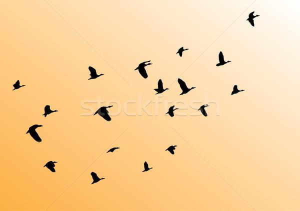 Birds Stock photo © lilac
