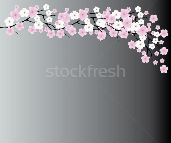 Flor de cereja árvore abstrato folha jardim fundo Foto stock © lilac
