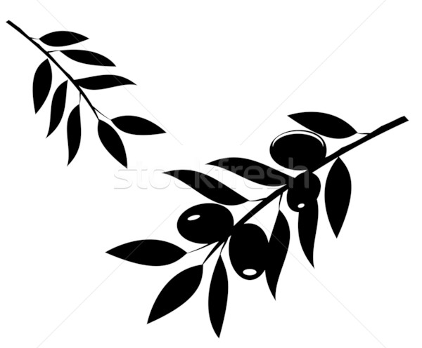 olive branch Stock photo © lilac