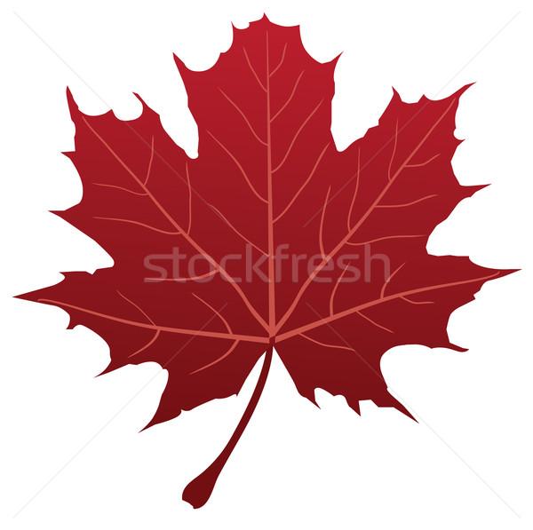 Maple Leaf вектора красный дерево аннотация дизайна Сток-фото © lilac