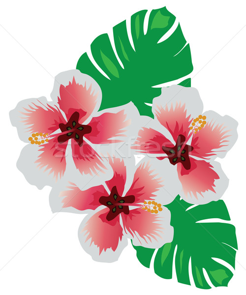 Tropical flowers Stock photo © lilac