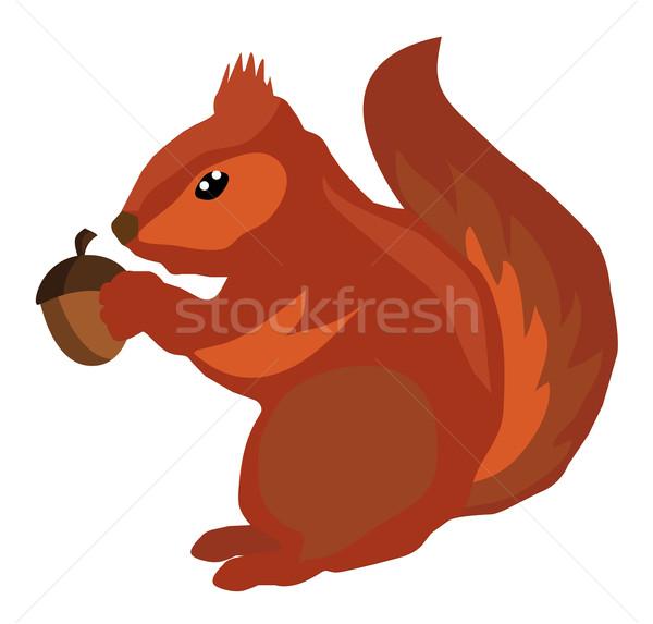 Vektor mókus makk gyerekek természet test Stock fotó © lilac