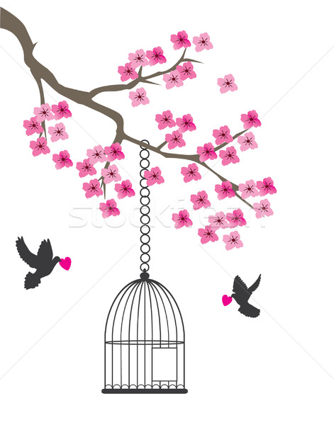 Dove and cage Stock photo © lilac