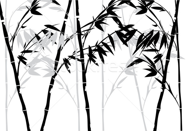 Bamboo Stock photo © lilac