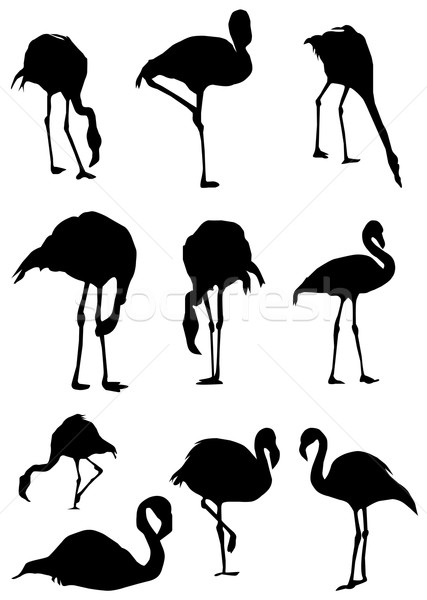 Flamingo Stock photo © lilac