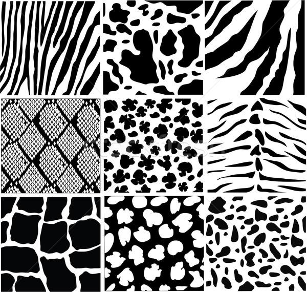 Stock photo: animal skin